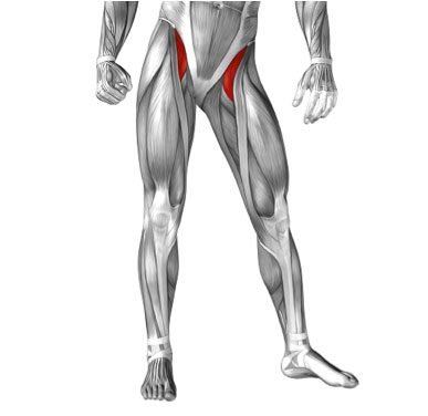 The Dancer's Hip: Anatomy and how the hip functions optimally for the dancer